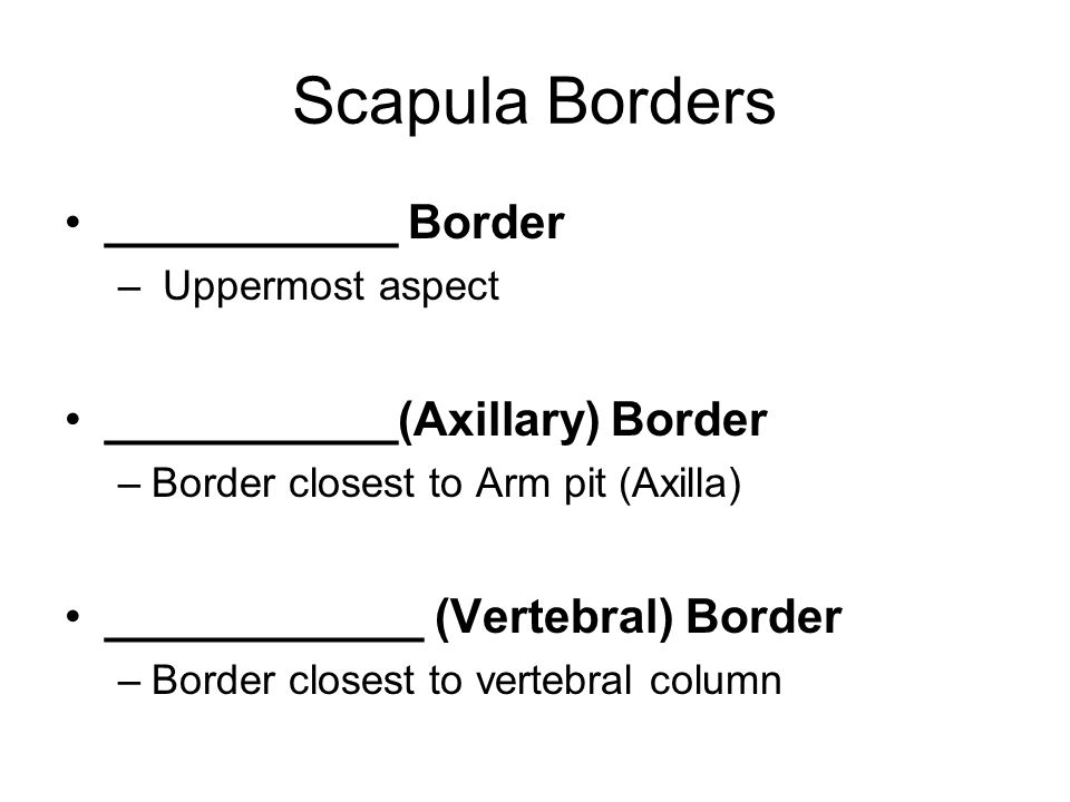 Scapula Borders ___________ Border ___________(Axillary) Border