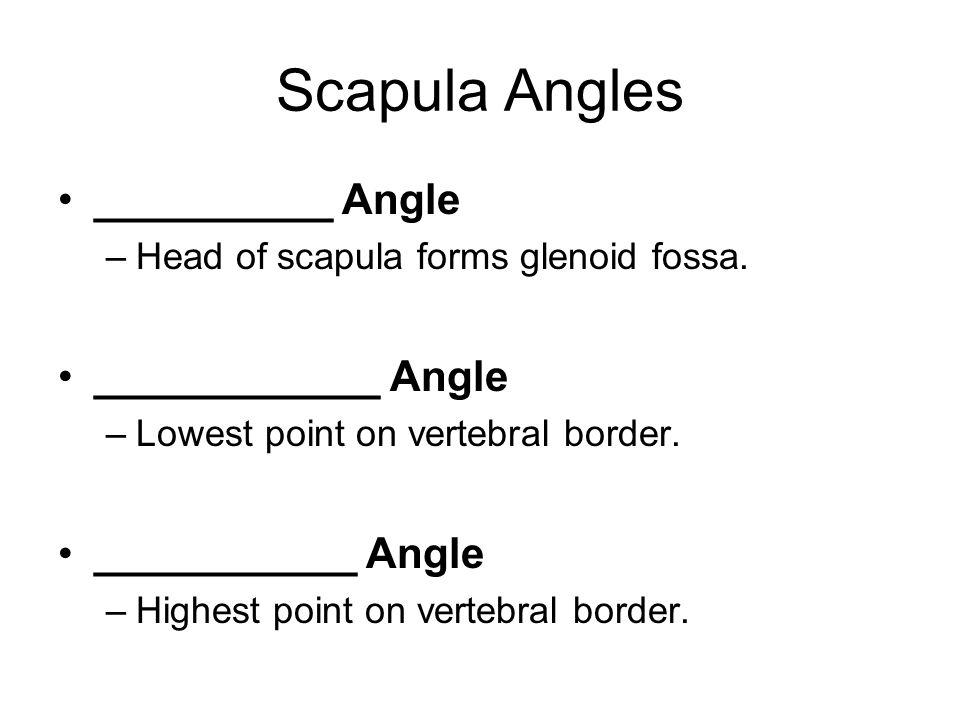 Scapula Angles __________ Angle ____________ Angle ___________ Angle