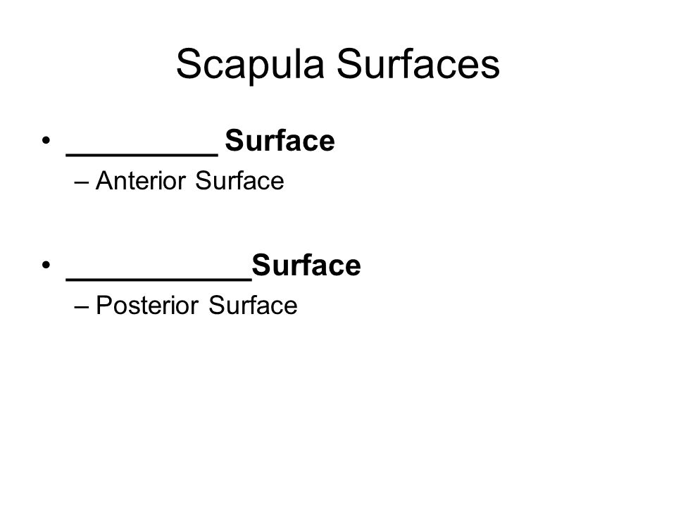 Scapula Surfaces _________ Surface ___________Surface Anterior Surface