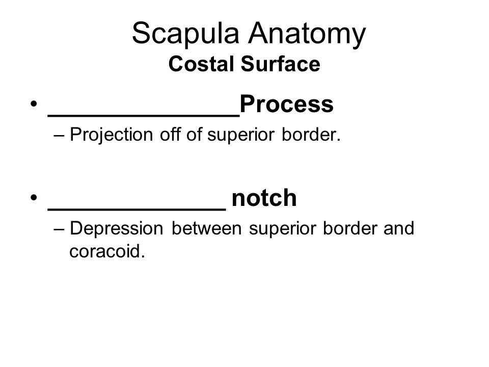 Scapula Anatomy Costal Surface