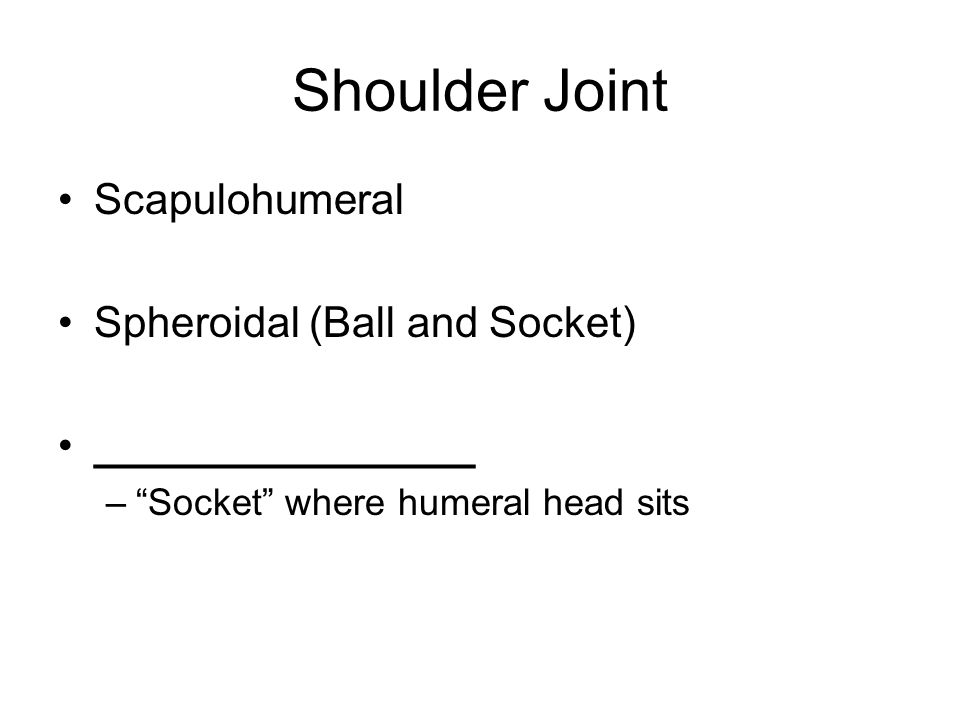 Shoulder Joint Scapulohumeral Spheroidal (Ball and Socket)