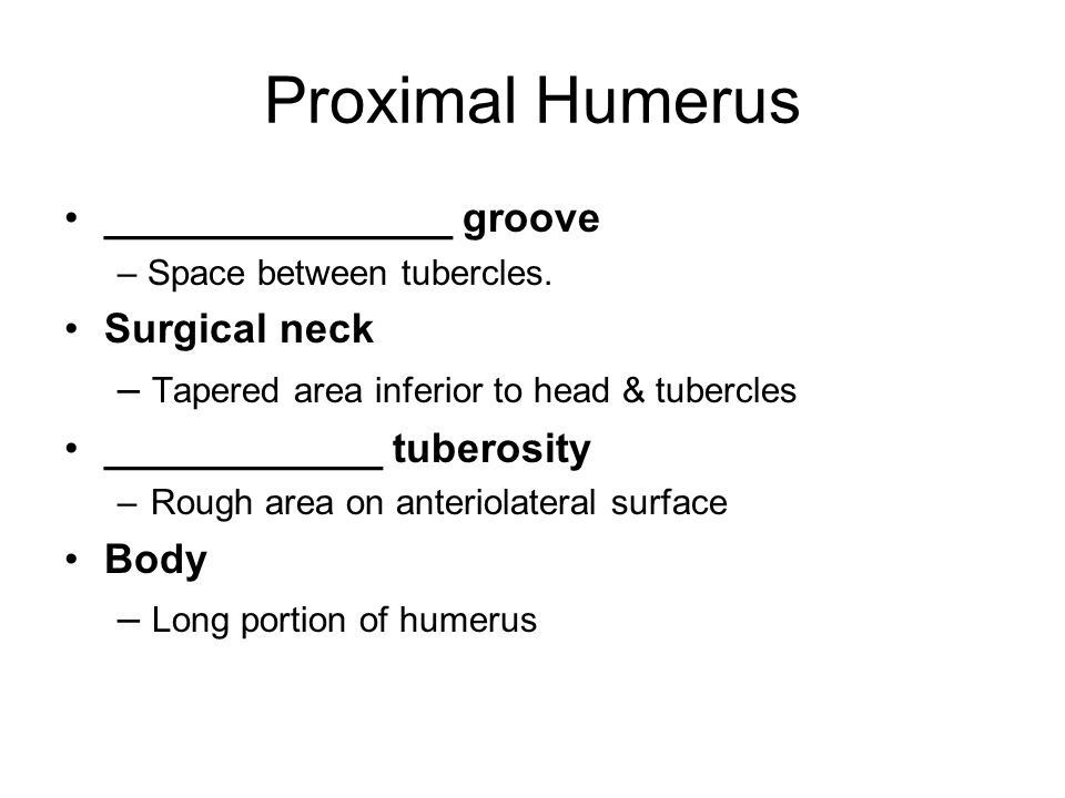 Proximal Humerus _______________ groove Surgical neck