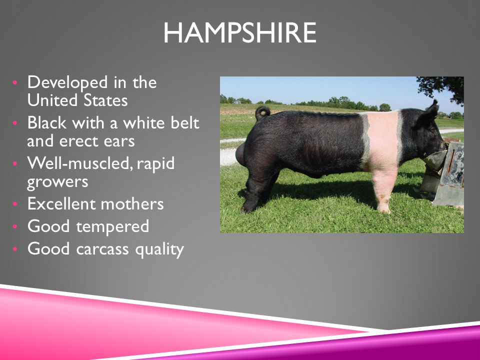 Hampshire Developed in the United States