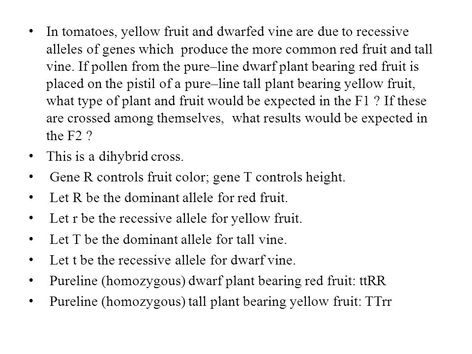 In tomatoes, yellow fruit and dwarfed vine are due to recessive alleles of genes which produce the more common red fruit and tall vine. If pollen from the pure–line dwarf plant bearing red fruit is placed on the pistil of a pure–line tall plant bearing yellow fruit, what type of plant and fruit would be expected in the F1 If these are crossed among themselves, what results would be expected in the F2