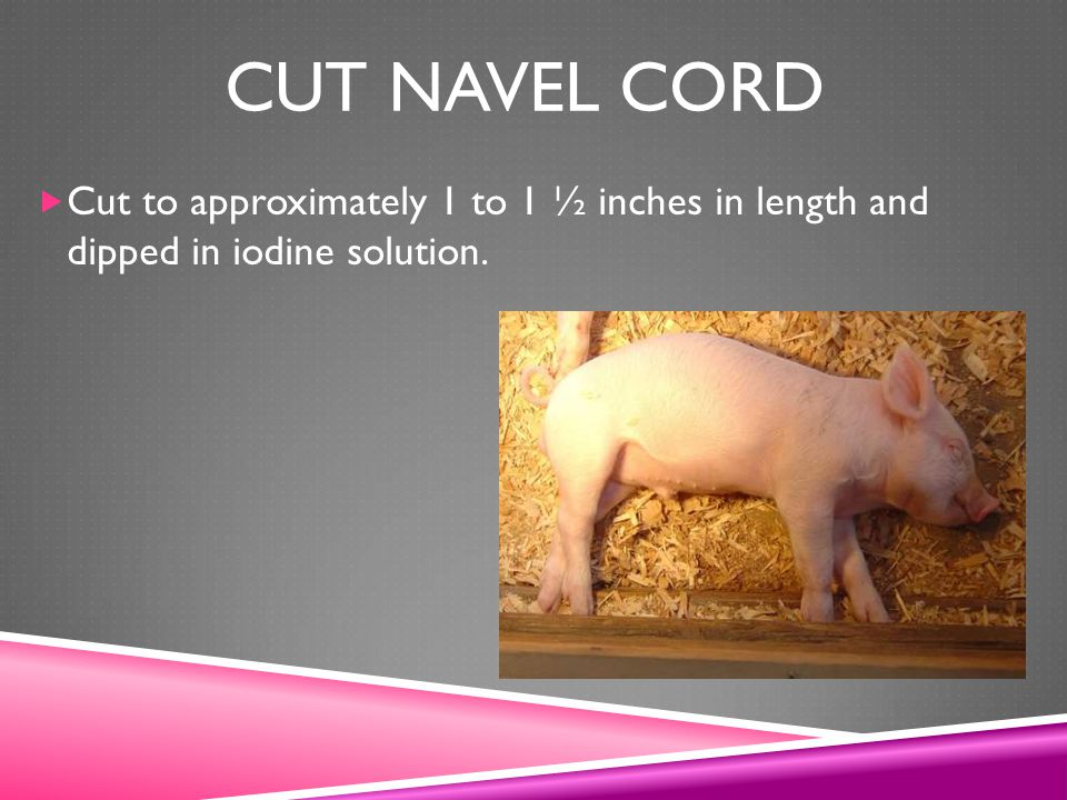 Cut navel cord Cut to approximately 1 to 1 ½ inches in length and dipped in iodine solution.