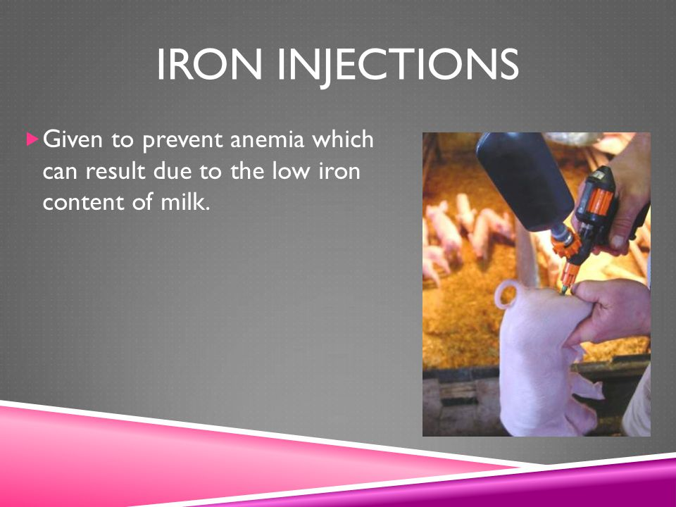 Iron injections Given to prevent anemia which can result due to the low iron content of milk.