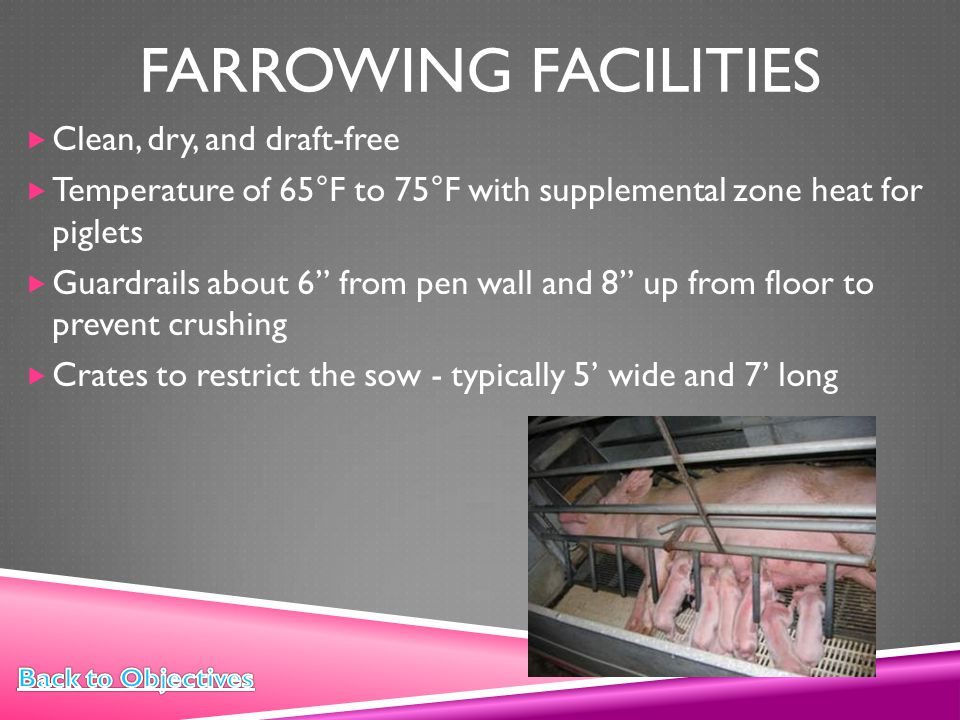 Farrowing Facilities Clean, dry, and draft-free