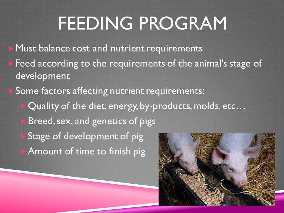 feeding program Must balance cost and nutrient requirements