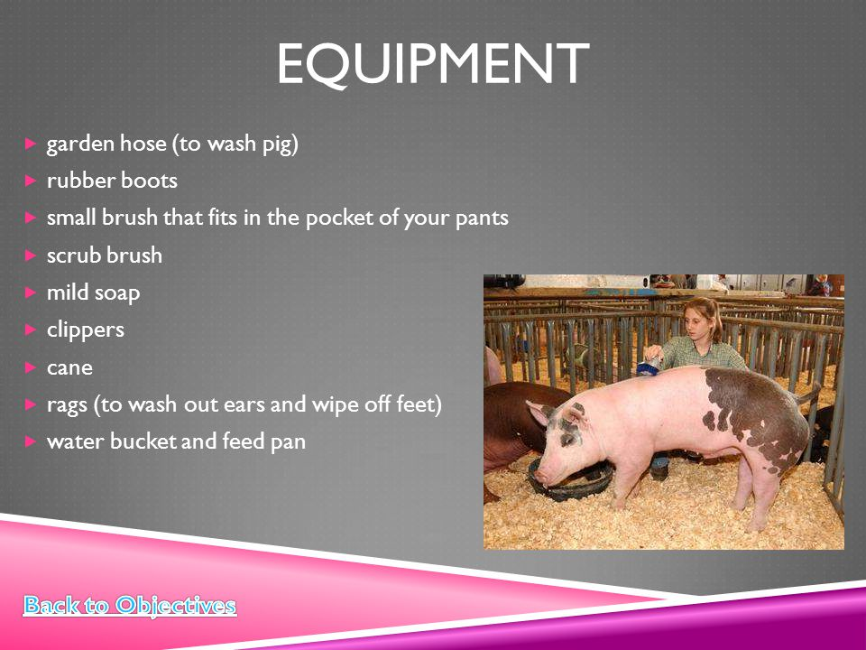 equipment garden hose (to wash pig) rubber boots
