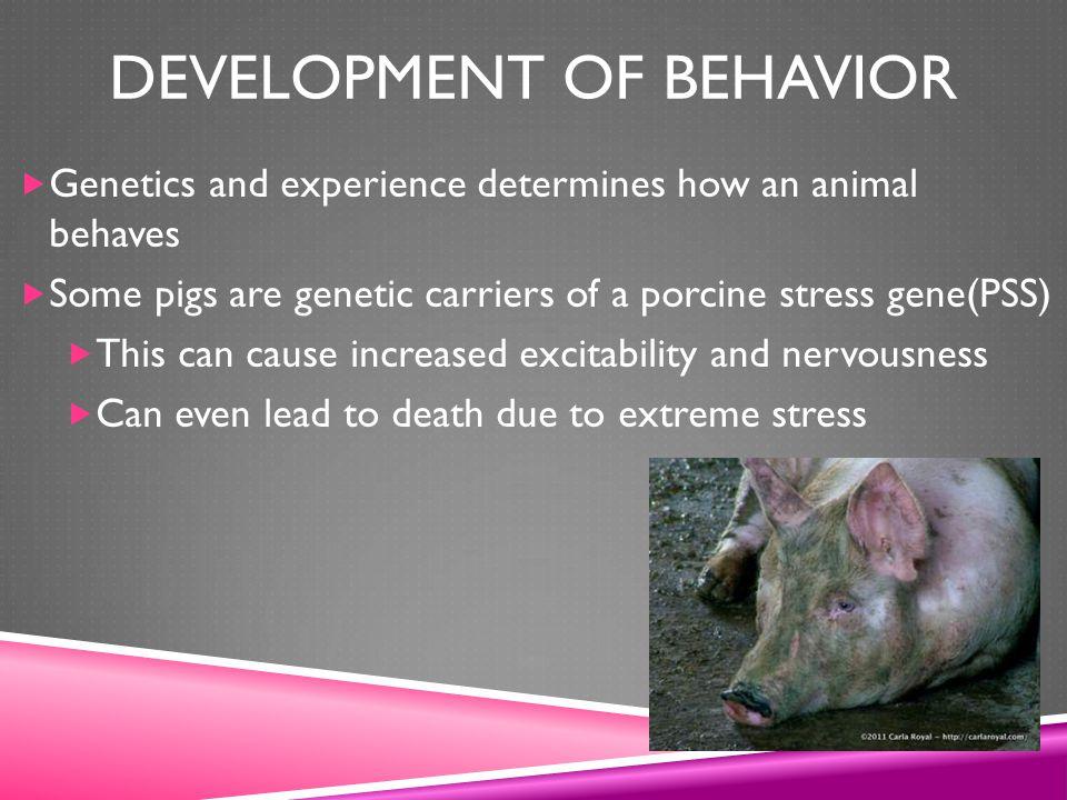 Development of Behavior