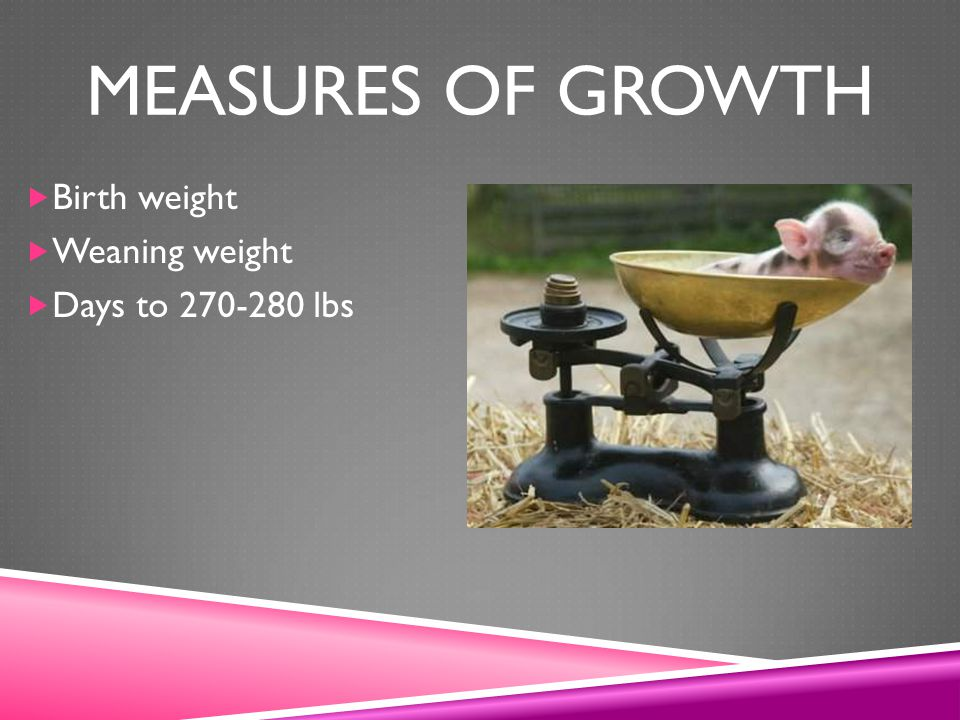 Measures of growth Birth weight Weaning weight Days to 270-280 lbs