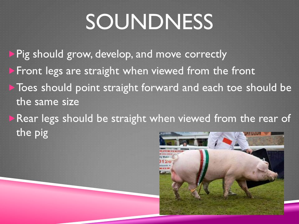 Soundness Pig should grow, develop, and move correctly