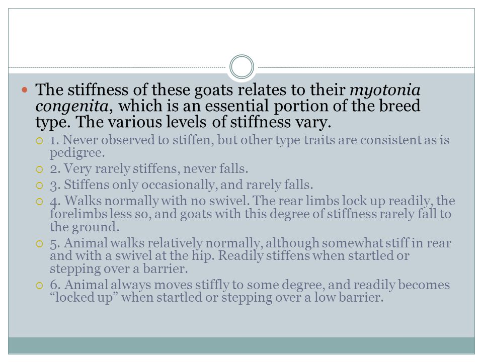 The stiffness of these goats relates to their myotonia congenita, which is an essential portion of the breed type. The various levels of stiffness vary.