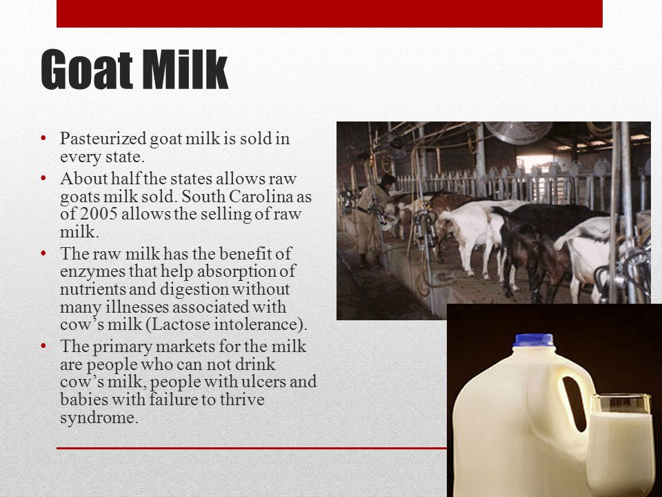 Goat Milk Pasteurized goat milk is sold in every state.