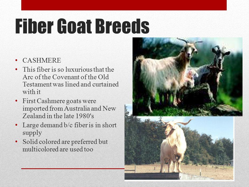 Fiber Goat Breeds CASHMERE