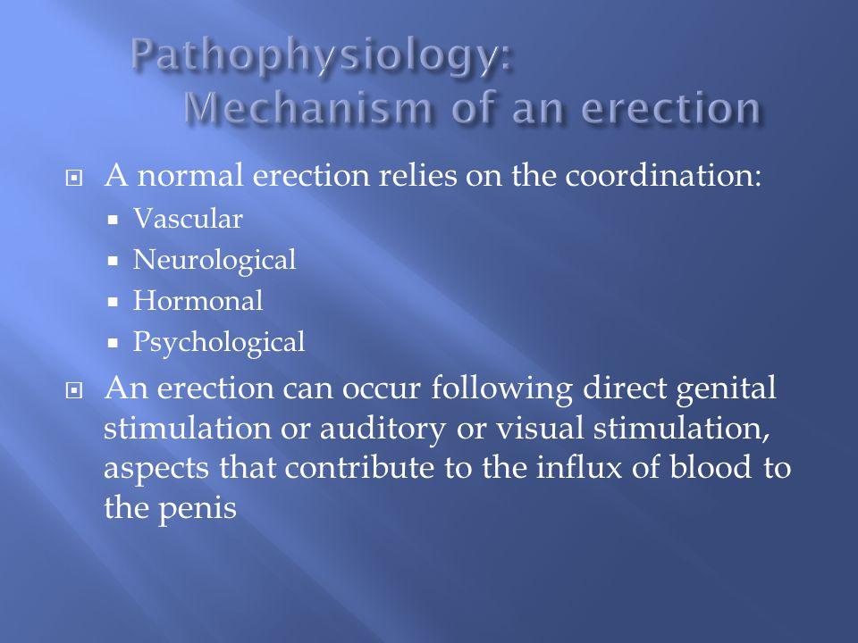 Pathophysiology: Mechanism of an erection