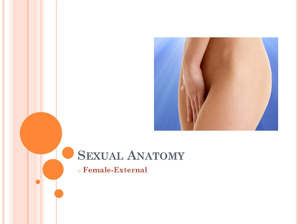 Sexual Anatomy Female-External