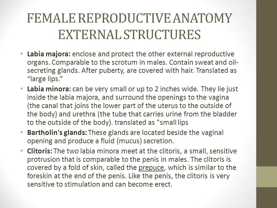FEMALE REPRODUCTIVE ANATOMY EXTERNAL STRUCTURES
