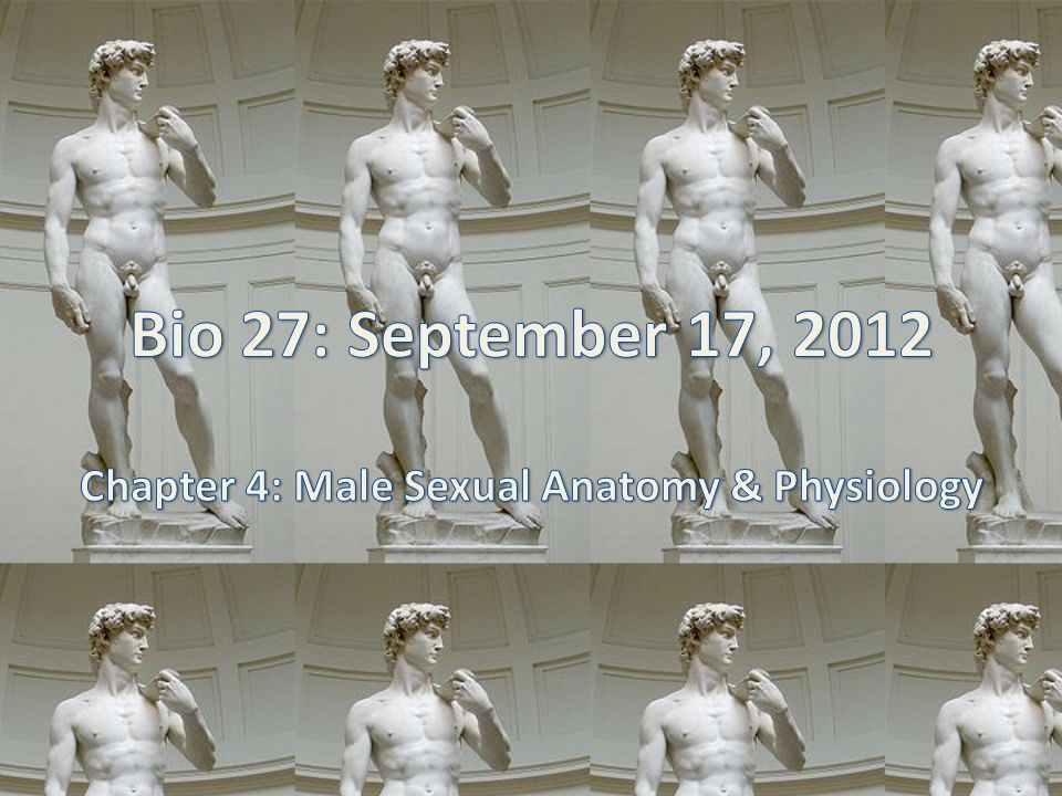 Chapter 4: Male Sexual Anatomy & Physiology