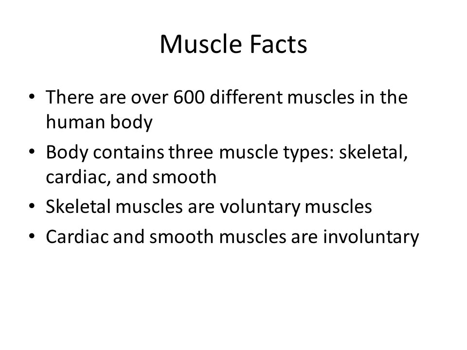 Muscle Facts There are over 600 different muscles in the human body