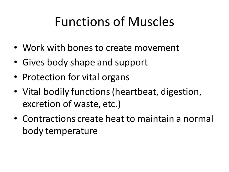 Functions of Muscles Work with bones to create movement