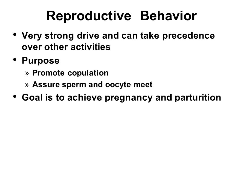 Bull sex drive and reproductive behavior