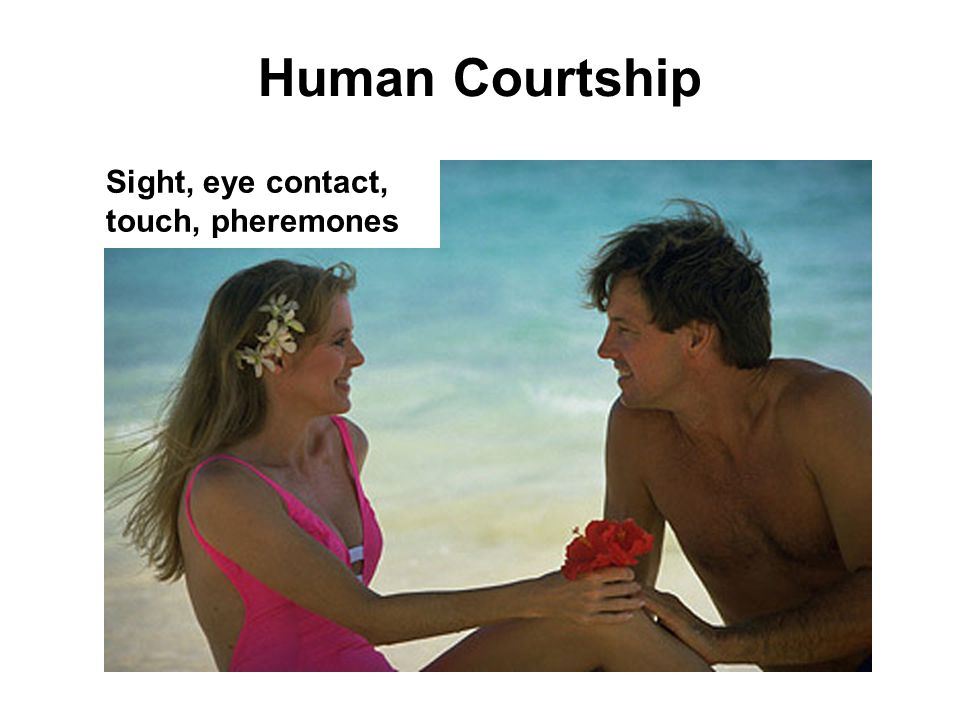 Human Courtship Sight, eye contact, touch, pheremones