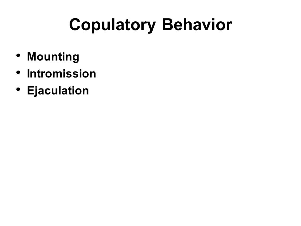 Copulatory Behavior Mounting Intromission Ejaculation