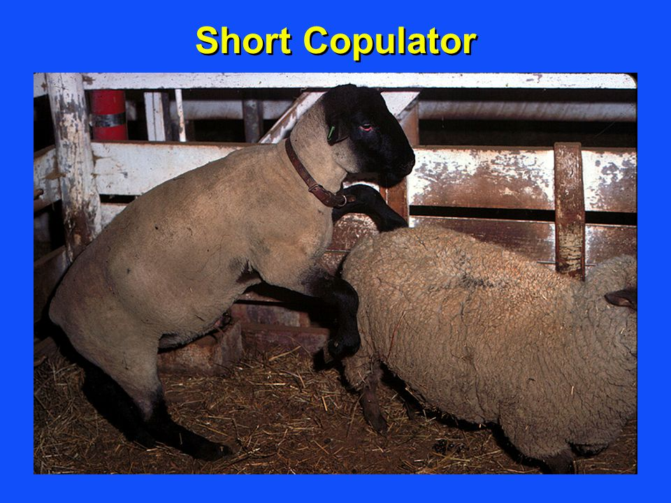 Short Copulator