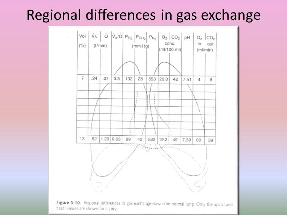 Regional differences in gas exchange