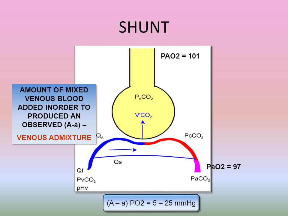 SHUNT PAO2 = 101. AMOUNT OF MIXED VENOUS BLOOD ADDED INORDER TO PRODUCED AN OBSERVED (A-a) – VENOUS ADMIXTURE.