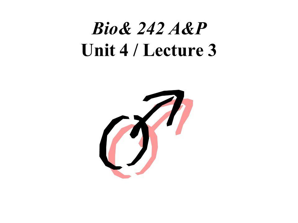 Bio& 242 A&P Unit 4 / Lecture 3