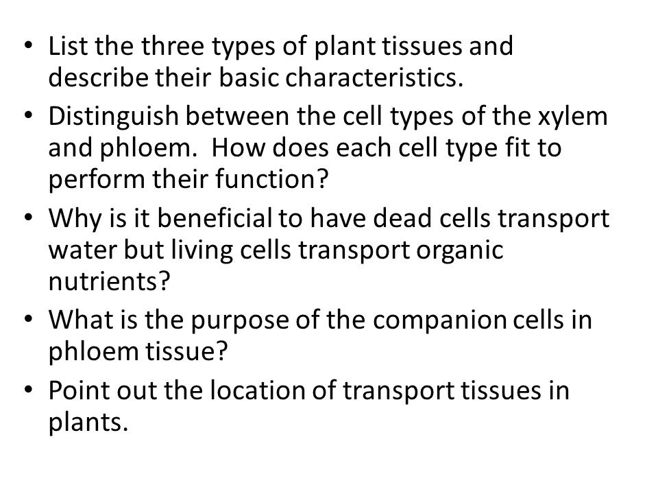List the three types of plant tissues and describe their basic characteristics.