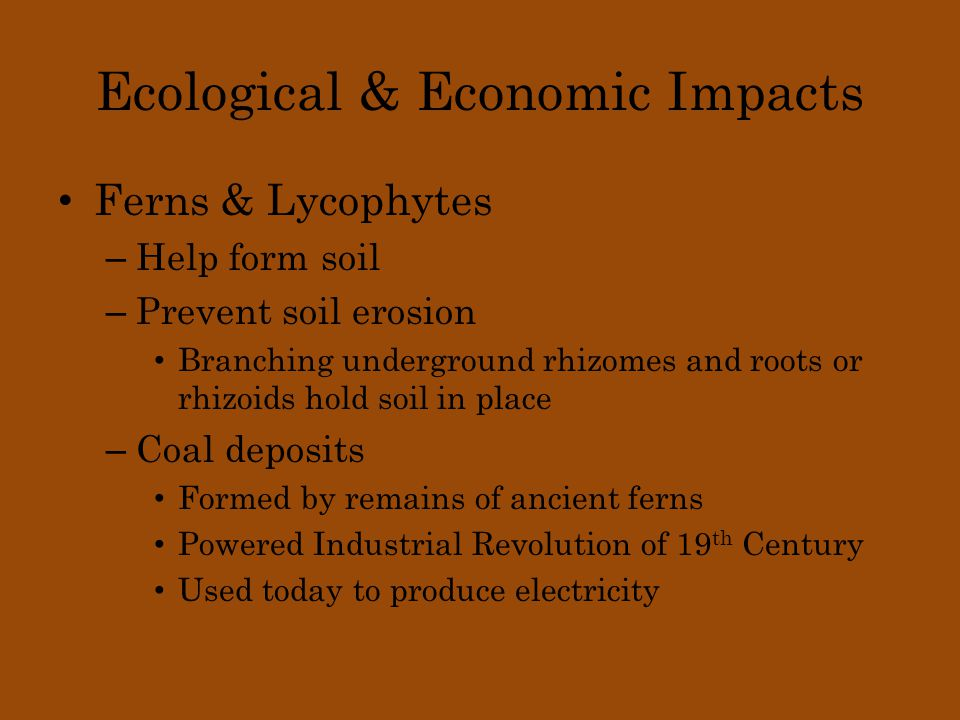 Ecological & Economic Impacts