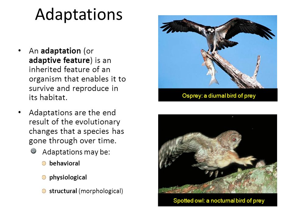Adaptations An adaptation (or adaptive feature) is an inherited feature of an organism that enables it to survive and reproduce in its habitat.