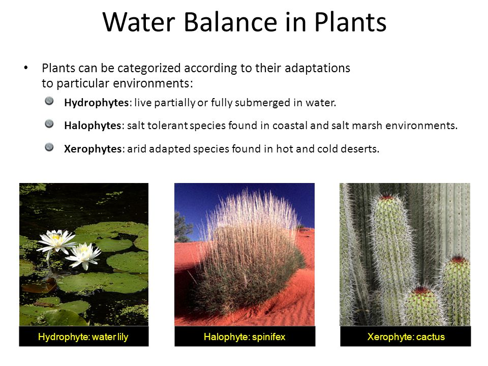 Water Balance in Plants