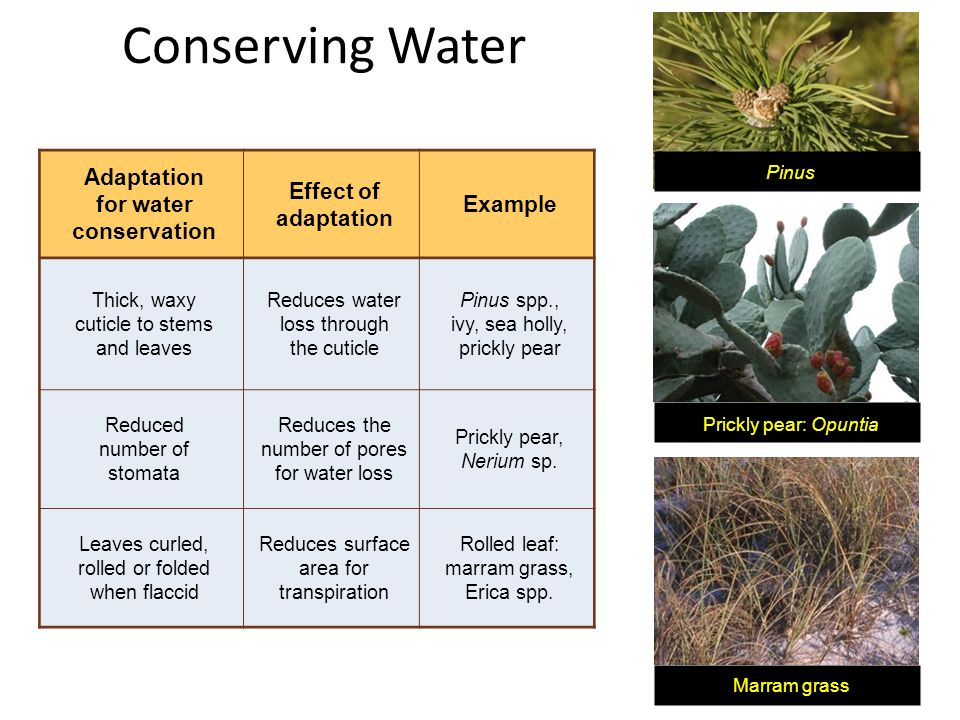 for water conservation