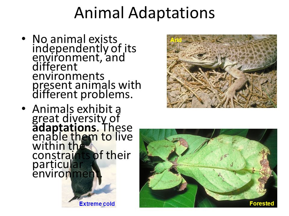 Animal Adaptations No animal exists independently of its environment, and different environments present animals with different problems.