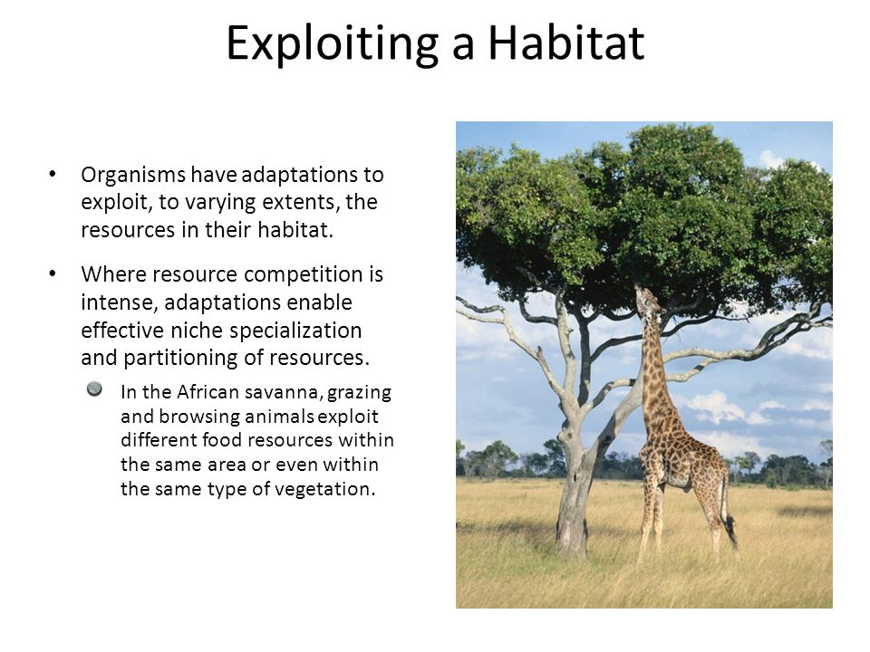 Exploiting a Habitat Organisms have adaptations to exploit, to varying extents, the resources in their habitat.
