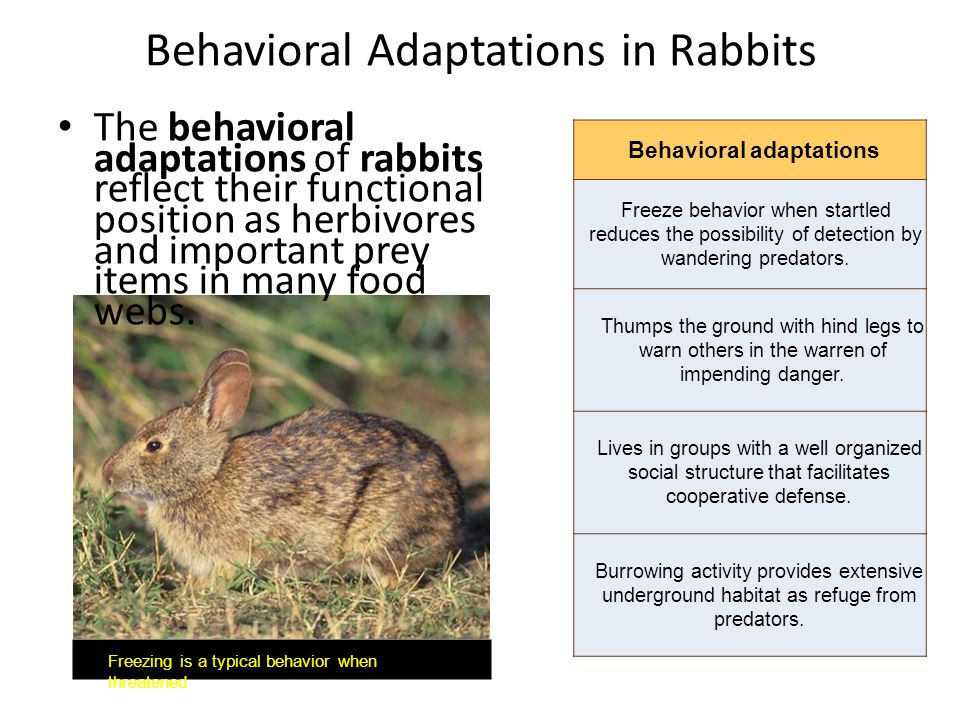 Behavioral Adaptations in Rabbits