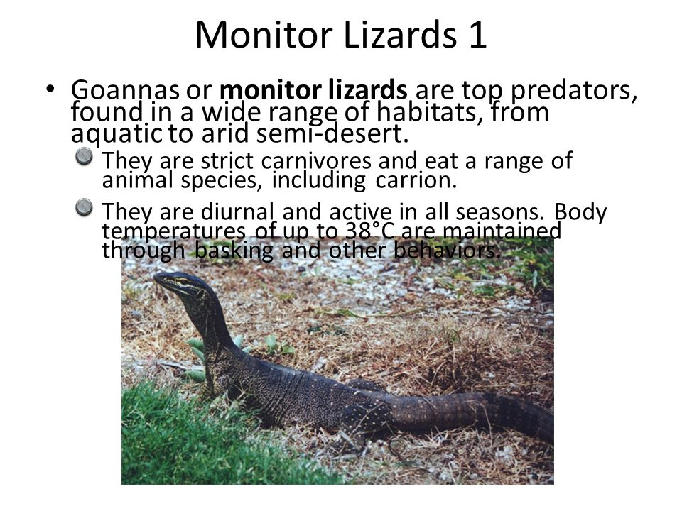 Monitor Lizards 1 Goannas or monitor lizards are top predators, found in a wide range of habitats, from aquatic to arid semi-desert.