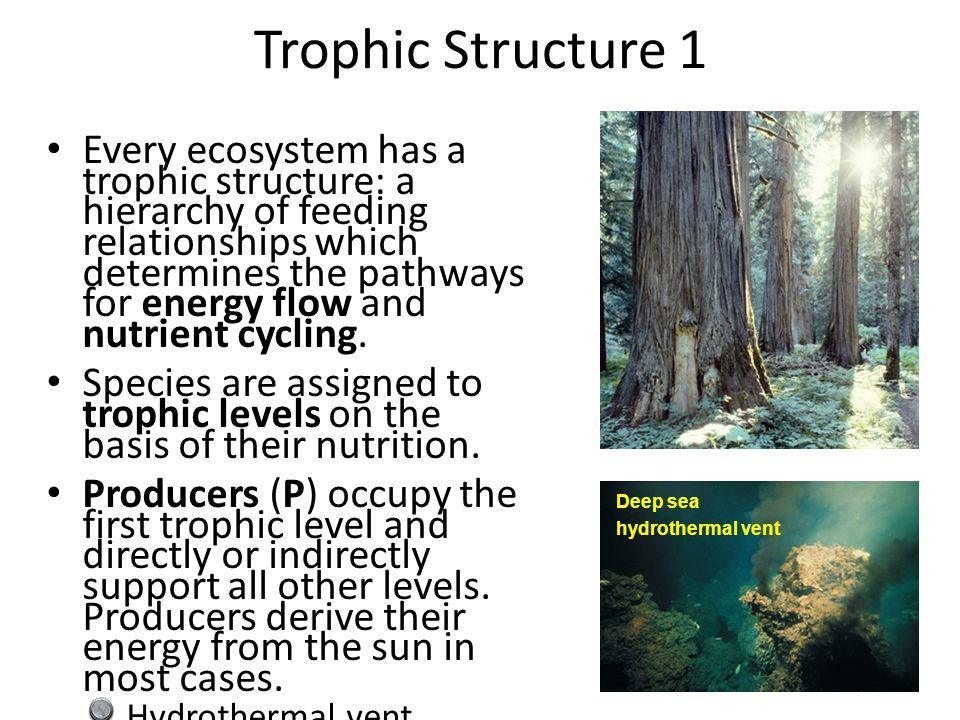 Trophic Structure 1