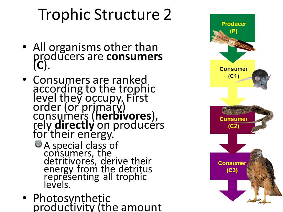 Trophic Structure 2 Producer. (P) All organisms other than producers are consumers (C).