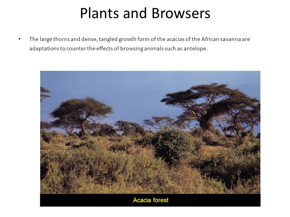Plants and Browsers
