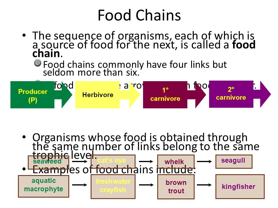 Food Chains The sequence of organisms, each of which is a source of food for the next, is called a food chain.