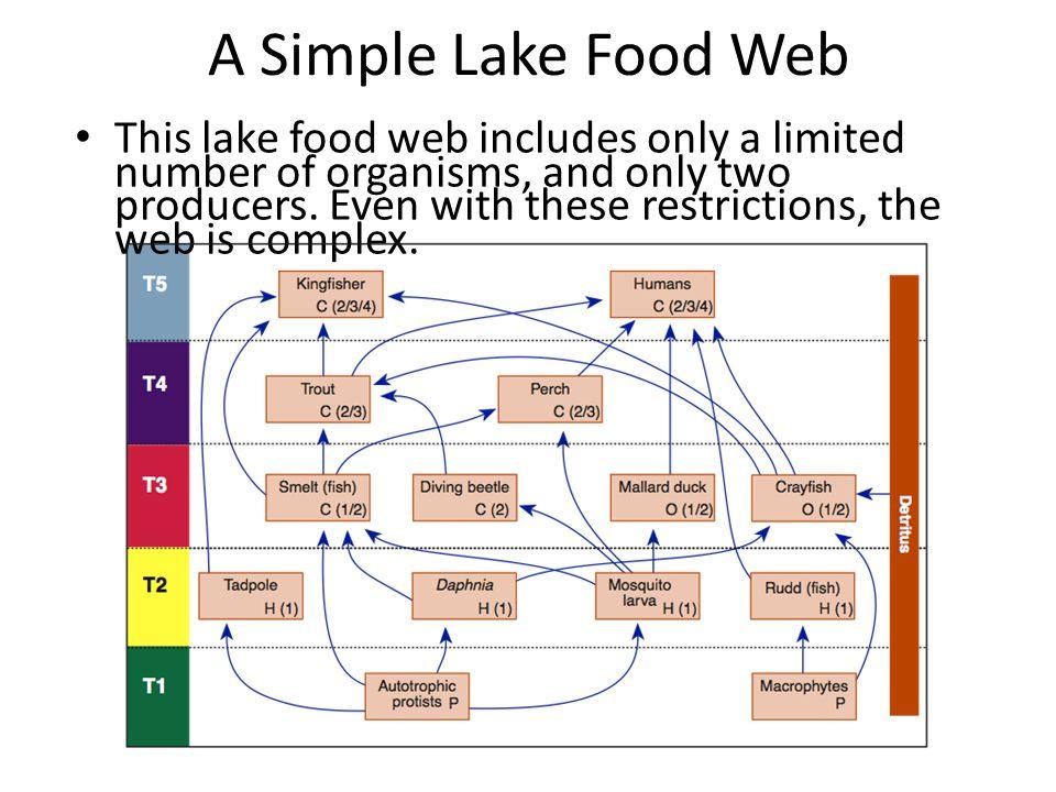 A Simple Lake Food Web