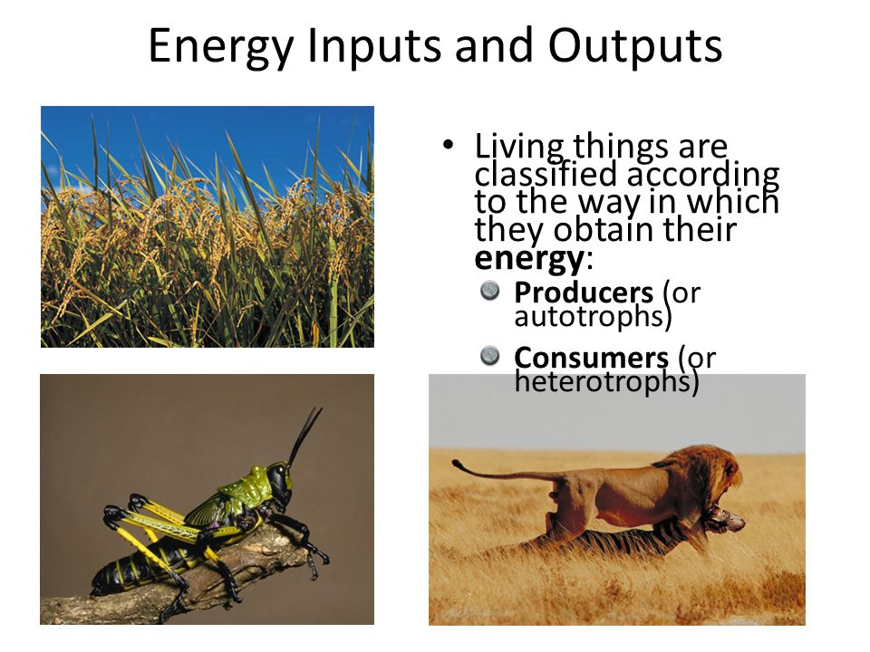 Energy Inputs and Outputs
