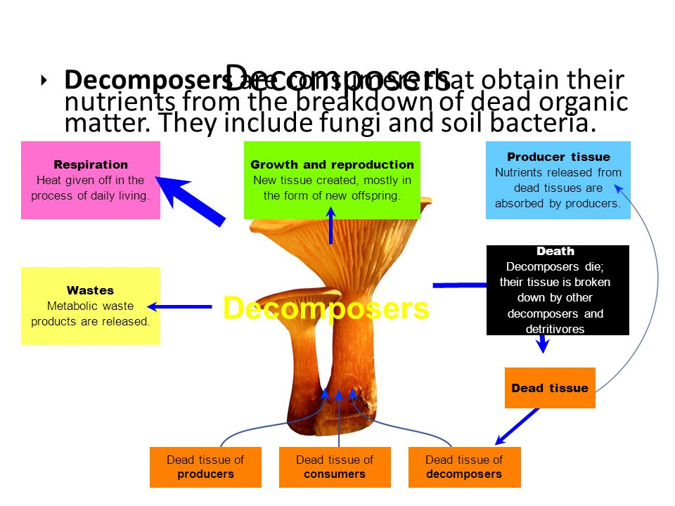 Decomposers Decomposers