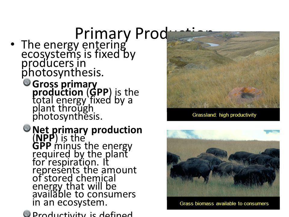 Primary Production The energy entering ecosystems is fixed by producers in photosynthesis.