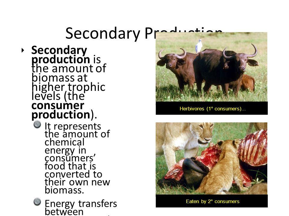 Herbivores (1° consumers)...